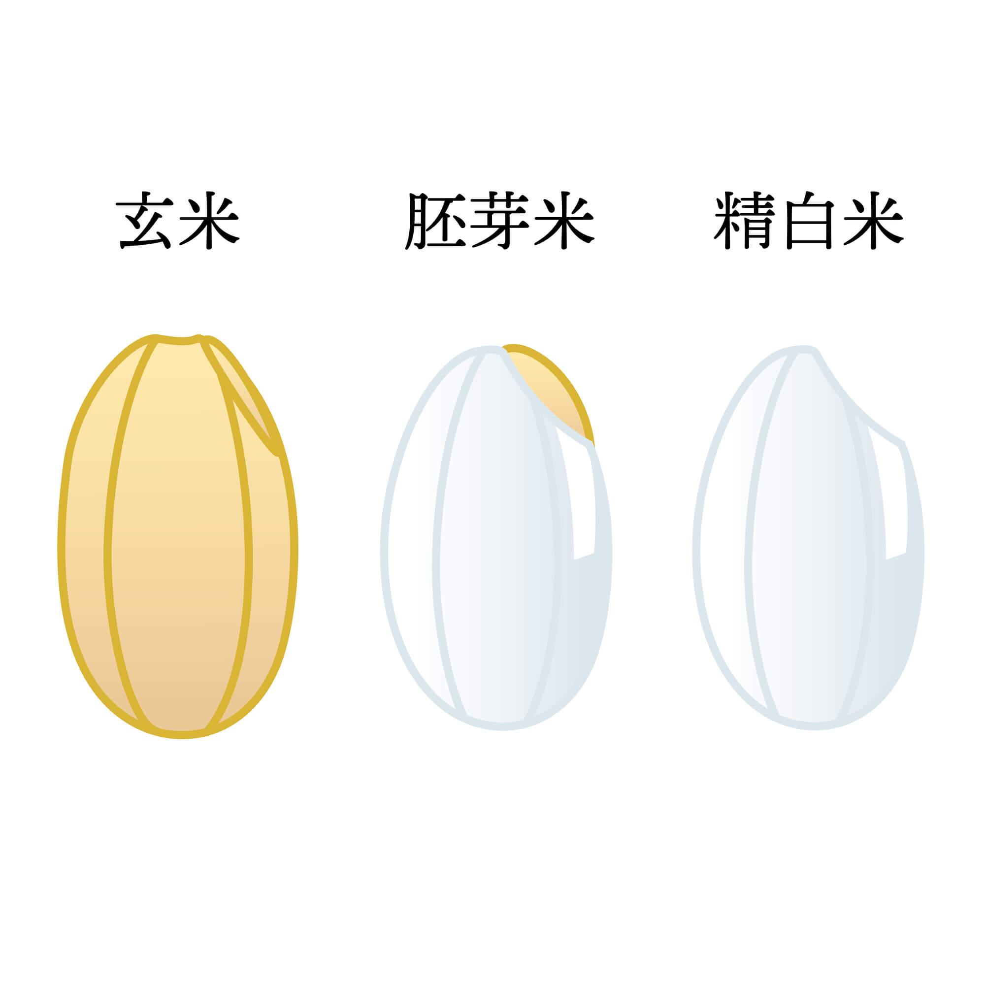 胚芽米とはどんなお米?胚芽米で得られるメリットなどご紹介!